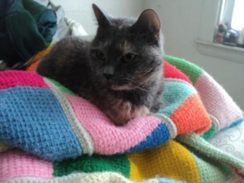 Fluffy- Anne