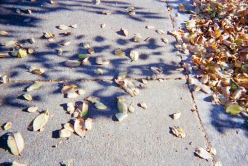 Leaves- Elisa